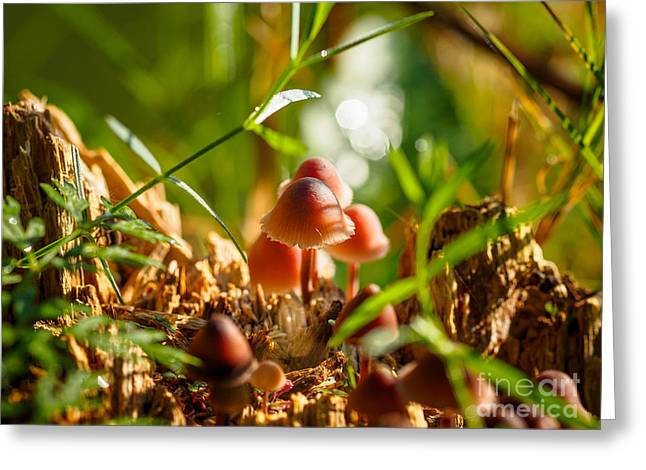 Mushrooms On A Decaying Stump Greeting Card