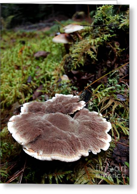 Mushrooms On A Stump Greeting Card by Steven Valkenberg