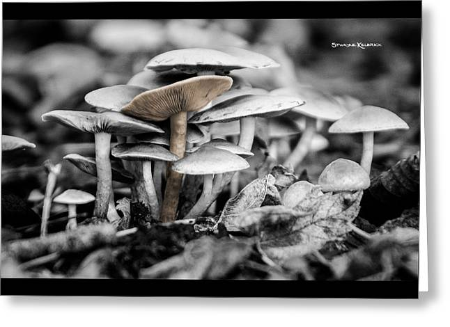 Greeting Card featuring the photograph Mushrooms by Stwayne Keubrick