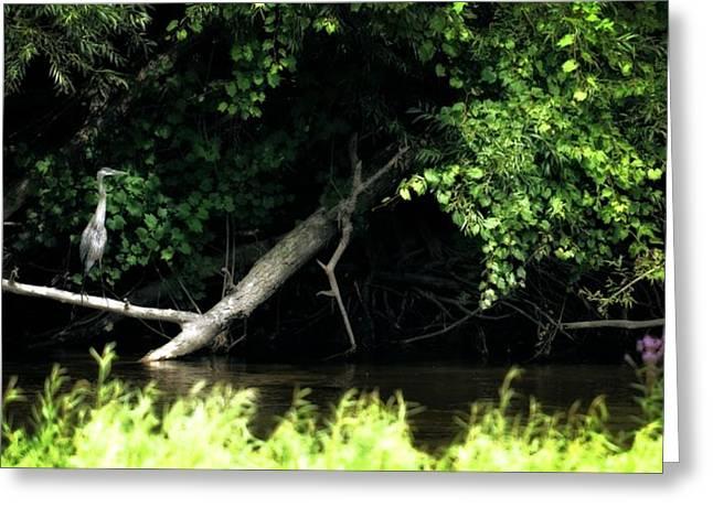 Muskegon River Heron Greeting Card