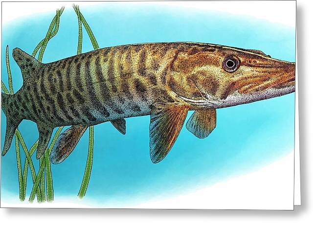 Muskellunge Greeting Card by Roger Hall