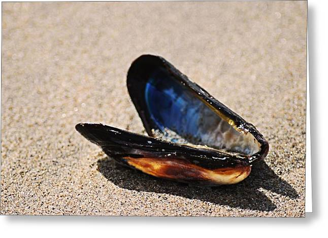 Greeting Card featuring the photograph Mussel Shell by Bob Wall