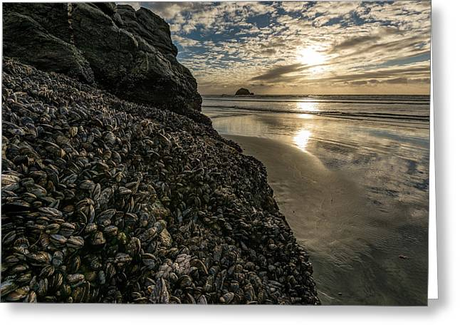 Mussels And Barnacles On Rock Greeting Card