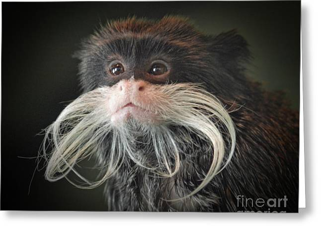Mustached Monkey Emperor Tamarin IIi  Greeting Card by Jim Fitzpatrick