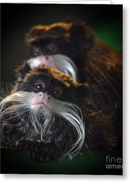 Mustached Monkeys Emperor Tamarins  Greeting Card by Jim Fitzpatrick