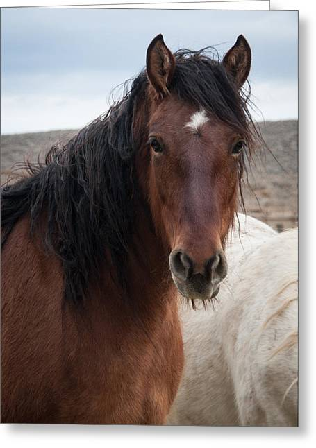 Mustang Beauty  Greeting Card