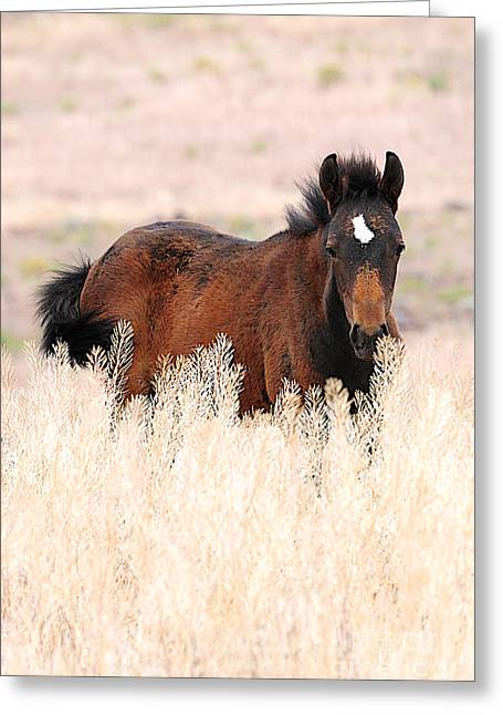 Greeting Card featuring the photograph Mustang Colt In The Grasses by Vinnie Oakes