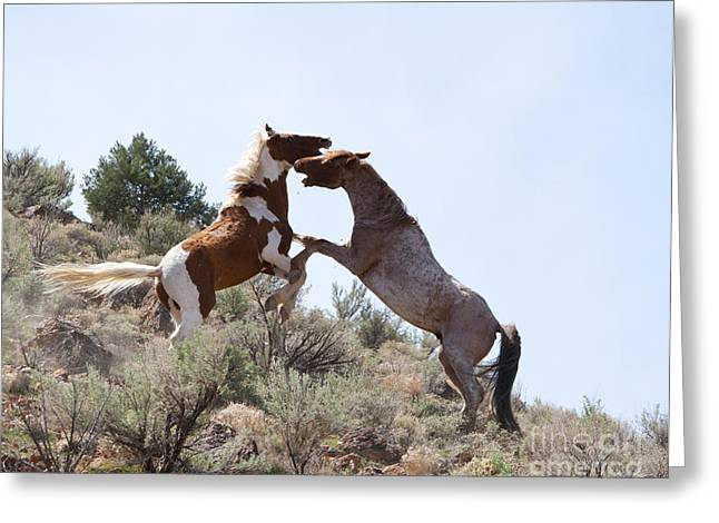 Mustang Fight Greeting Card