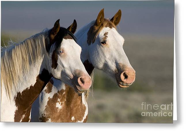 Mustang Mare And Son Greeting Card by Jean-Louis Klein and Marie-Luce Hubert