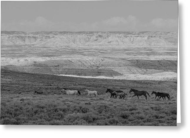 Mustangs Of The Adobe Greeting Card