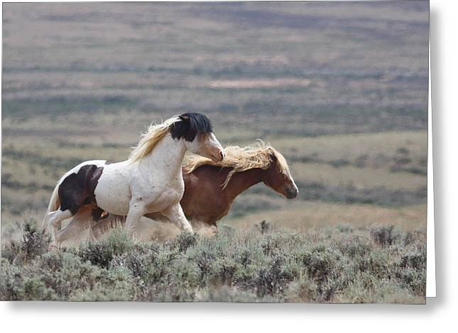 Mustangs On The Move Greeting Card