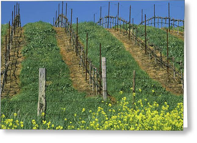 Mustard And Vine Crop In The Vineyard Greeting Card by Panoramic Images