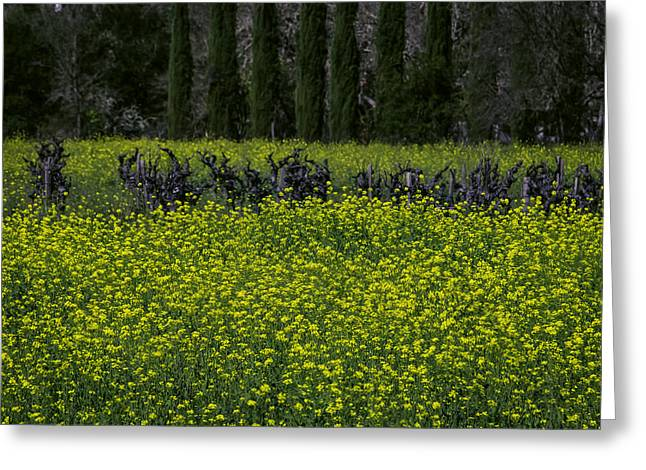 Mustard Grass In An Old Vineyard Greeting Card by Garry Gay
