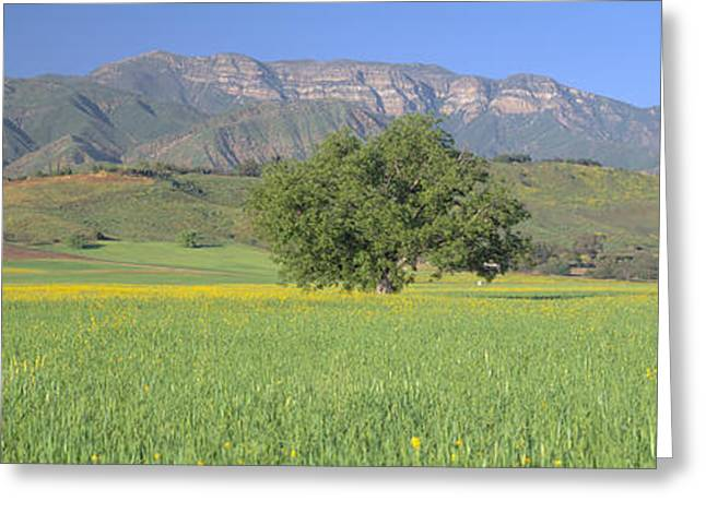 Mustard In Green Field And Topa Topa Greeting Card by Panoramic Images