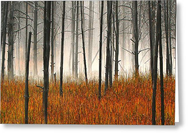 Greeting Card featuring the photograph Mute Dog Forest Pano by Clare VanderVeen