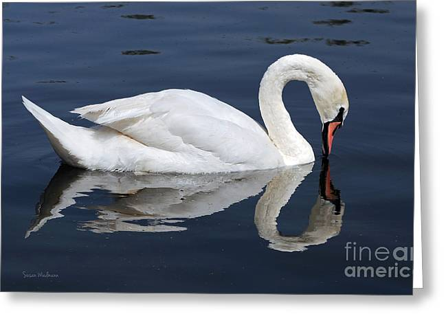Mute Swan Kissing Its Reflection Greeting Card
