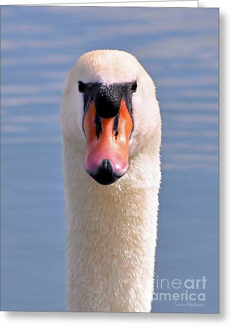 Mute Swan Staring Greeting Card