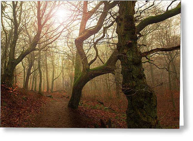 My Autumn Walk.. Greeting Card