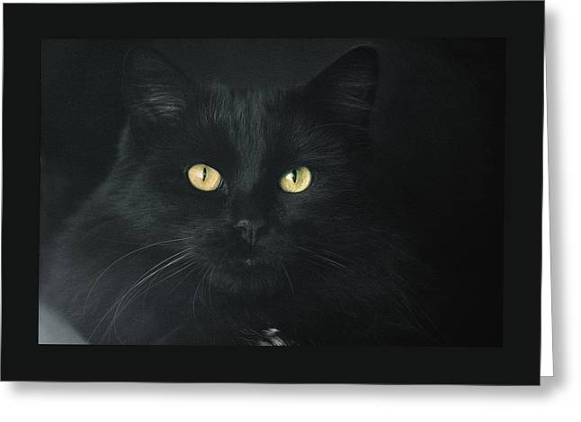 My Black Golden-eyed One Greeting Card by Daniel Furon