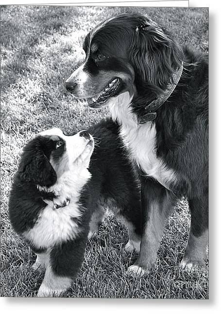 Greeting Card featuring the photograph My Bodyguard by Barbara Dudley