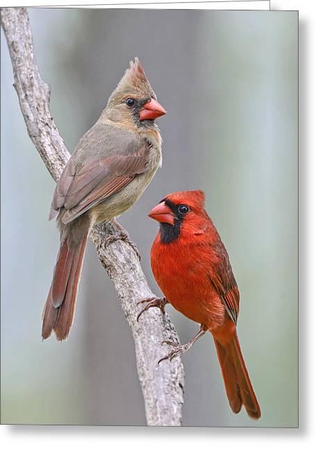 My Cardinal Neighbors Greeting Card