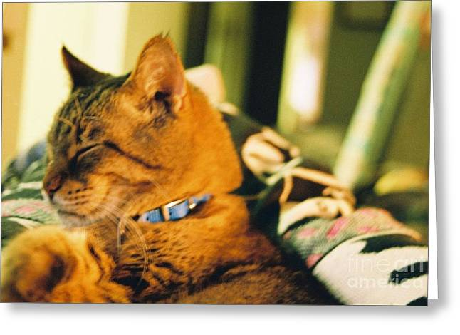 My Cat Greeting Card by Debbie Wells