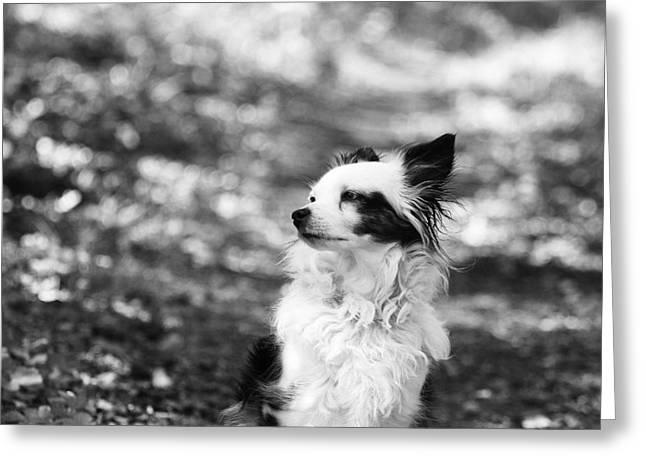 My Dog Greeting Card by Daniel Precht