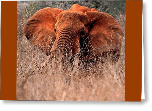 My Elephant In Africa Greeting Card by Phyllis Kaltenbach