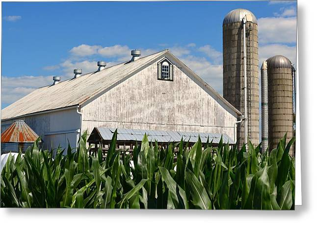 My Favorite Barn In Summer Greeting Card