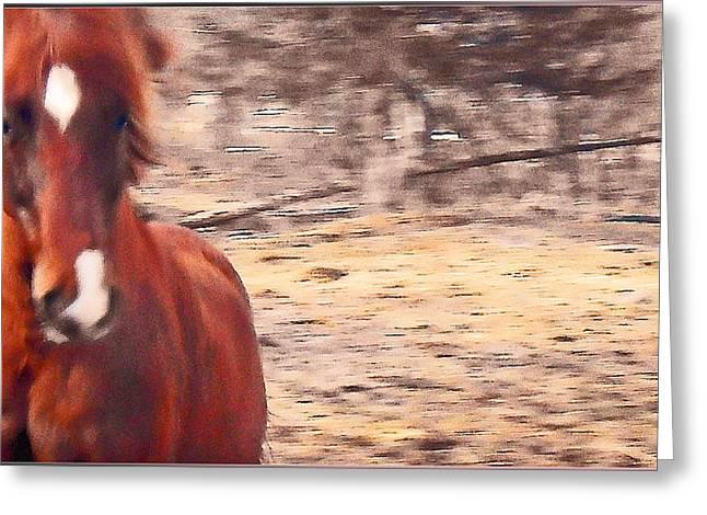 My Fine Friend The Flashy Chestnut Stallion Greeting Card by Patricia Keller