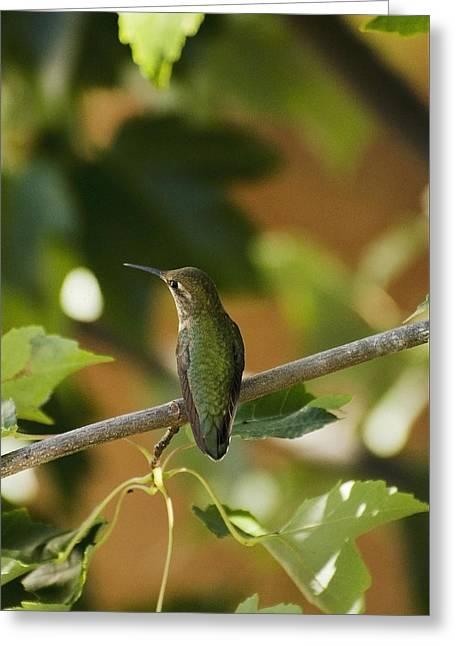 My Green Colored Hummingbird 4 Greeting Card