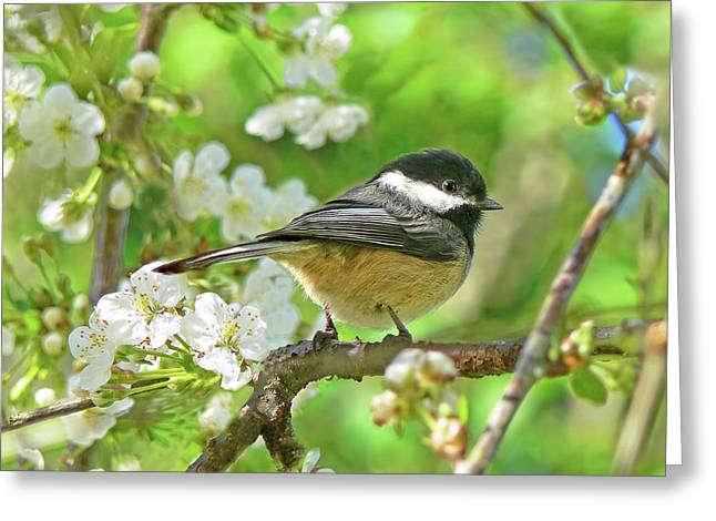 My Little Chickadee In The Cherry Tree Greeting Card by Jennie Marie Schell