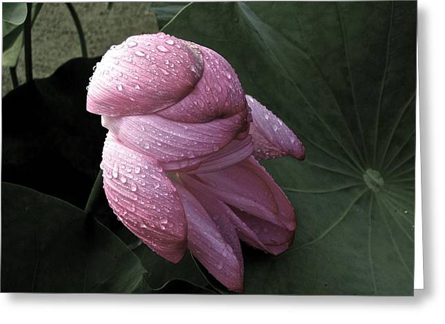 My Lotus My Love Greeting Card
