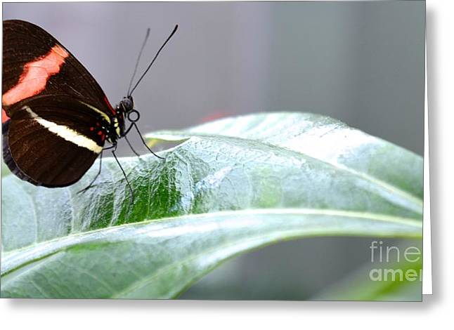 Greeting Card featuring the photograph My Pretty Butterfly by Carla Carson