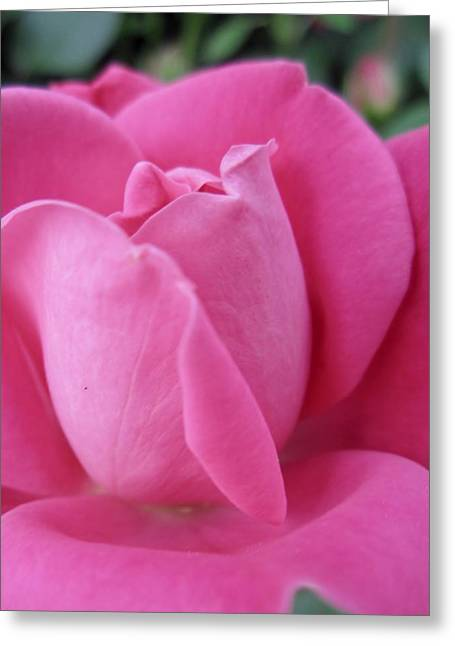 My Rose Greeting Card