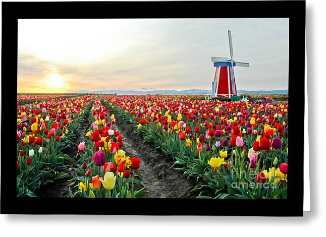 My Touch Of Holland 2 Greeting Card by Nick  Boren