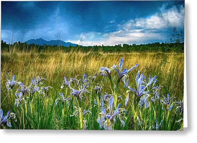 My Wild Iris Rows Greeting Card