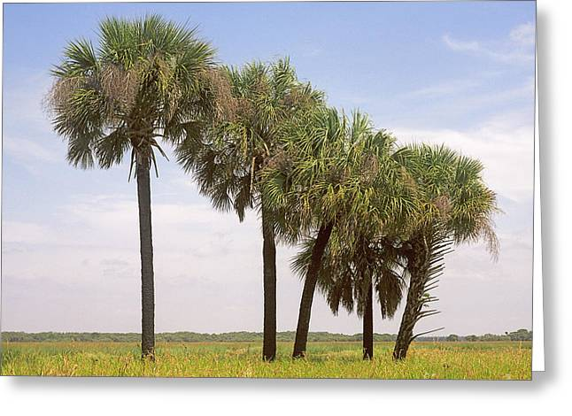 Myakka Greeting Card