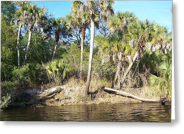 Myakka River Greeting Card