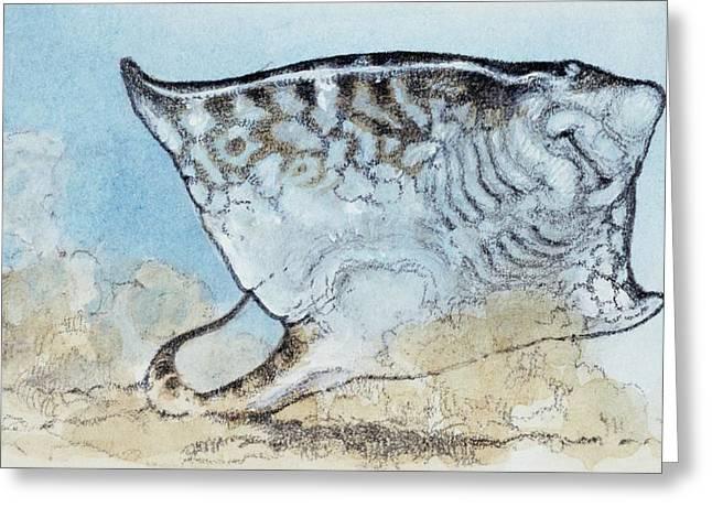Myliobatis Greeting Card by Deagostini/uig