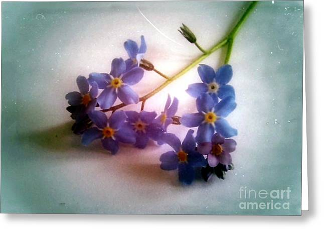 Myosotis  Forget Me Not Greeting Card