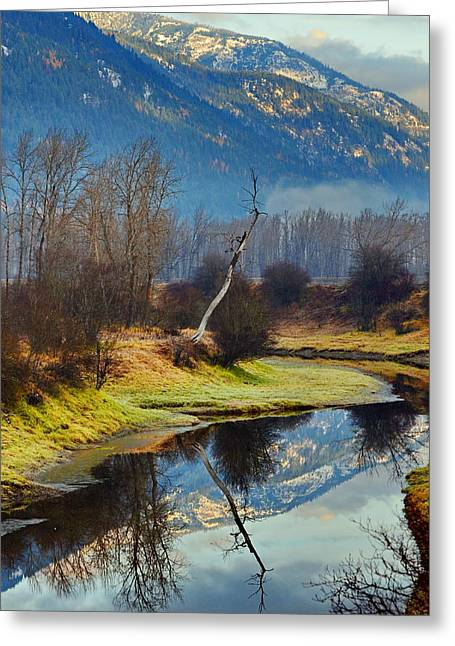 Myrtle Creek Reflections Greeting Card by Annie Pflueger