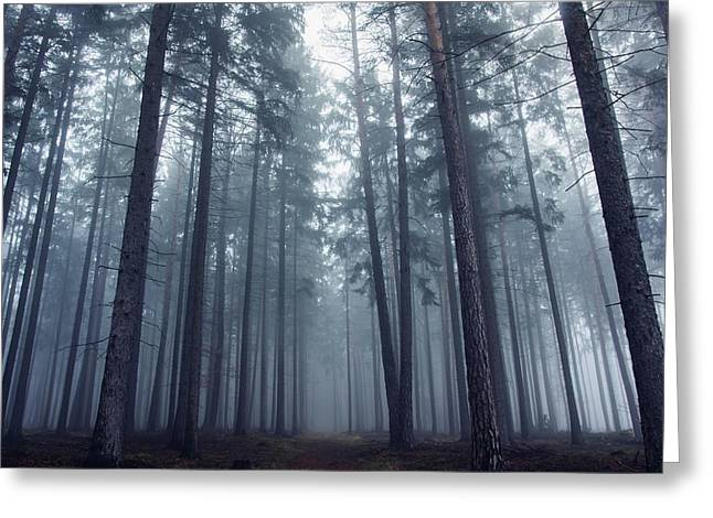 Mysterious Foggy Forest. Greeting Card