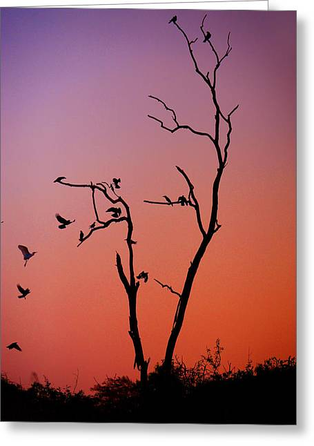 Mysterious Sunset With Solo Of The Tree And Choir Of Birds  Greeting Card