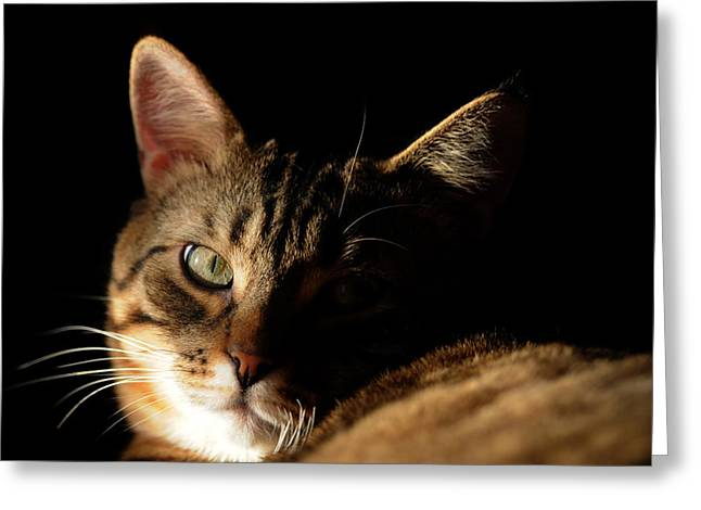 Mysterious Tabby Cat Greeting Card by Renee Forth-Fukumoto
