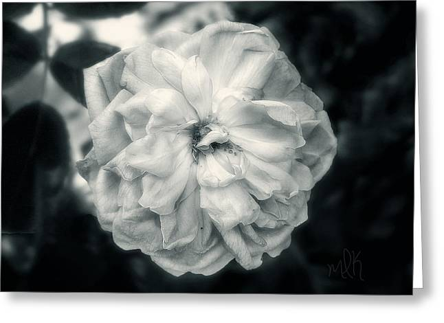 Greeting Card featuring the photograph Marie-louise Rose by Louise Kumpf