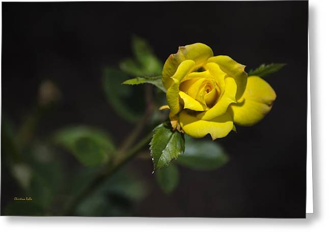 Mystic Yellow Rose Greeting Card by Christina Rollo