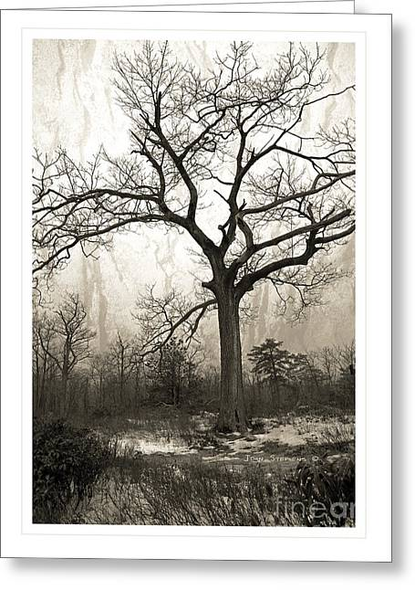 Mystical Forest Greeting Card by John Stephens