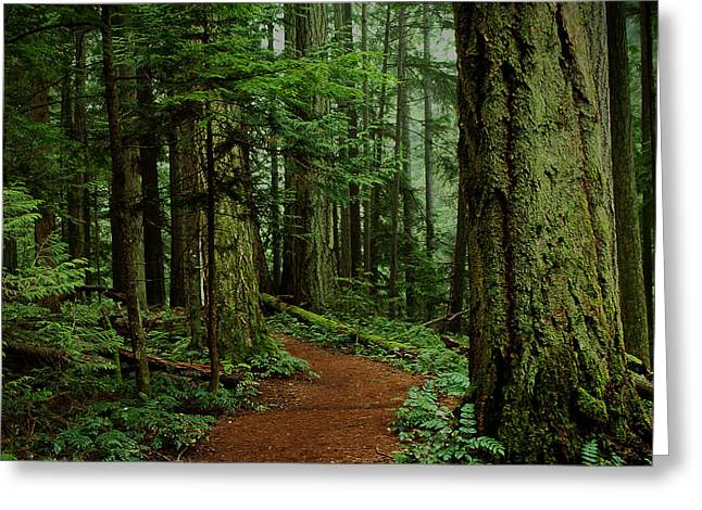 Mystical Path Greeting Card by Randy Hall
