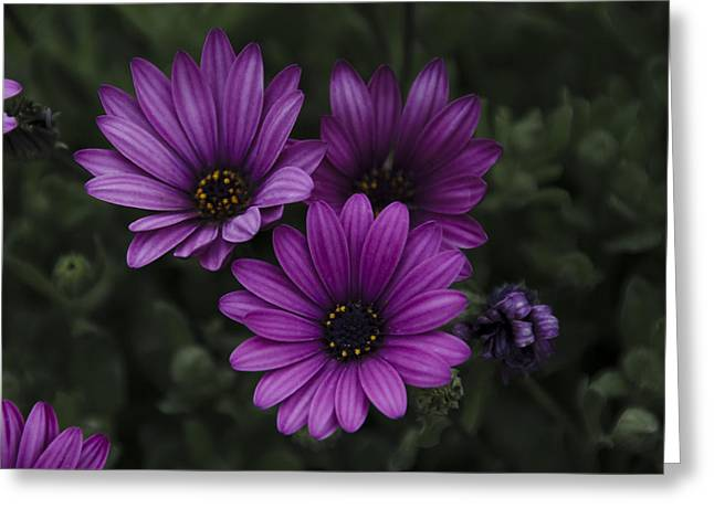 Mystical Purple Greeting Card by Penny Lisowski